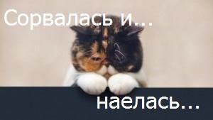 """срывы в похудении: фото котика с надписью """"сорвалась"""""""