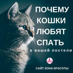 Хотите знать, почему ваш кот спит рядом? Простой ответ по ссылке