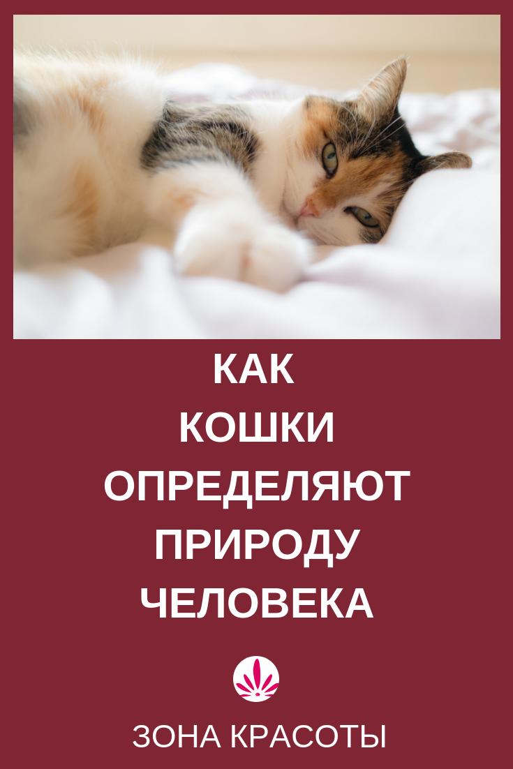 Котики могут быть и смешные. Но любовь, которую они проявляют, может рассказать о многом